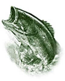 PaulJadroFish